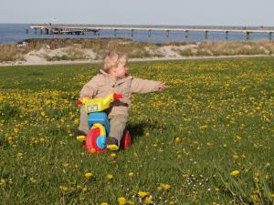 Der Deich als Blumen- und Spielwiese