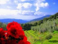 Ferienwohnung in Campiglia Marittima, Toskana an der etruskischen Küste! Urlaub in Italien!