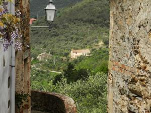 Mitten im Olivenhain (von Montemagno aus gesehen)