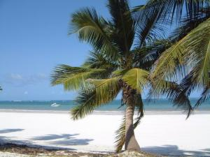 ...and a coast well stocked with palms