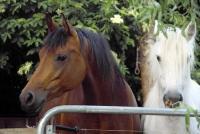 Uriges kleines Ferienhaus bei Rhauderfehn, Ostfriesland, auch für Hunde- und Pferdebesitzer geeignet