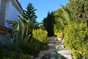 Gartenanlage hinter dem Haus